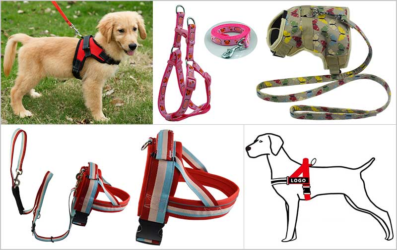 Why A Harness Is Often A Better Choice Than A Collar