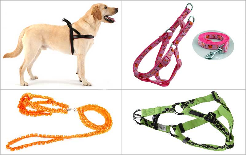 how to put harness on dog