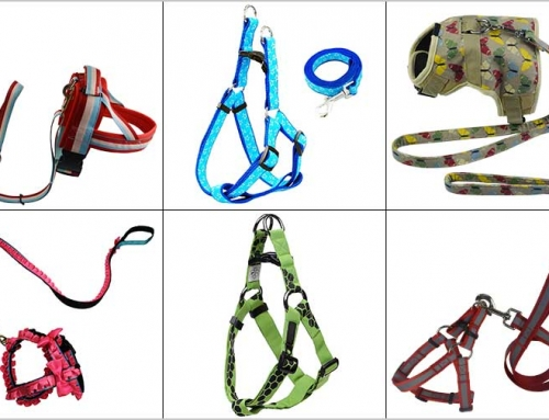 How to choose the right size of pet harness for your dog