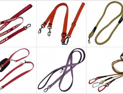 How To Purchasing The Suitable Dog Leash