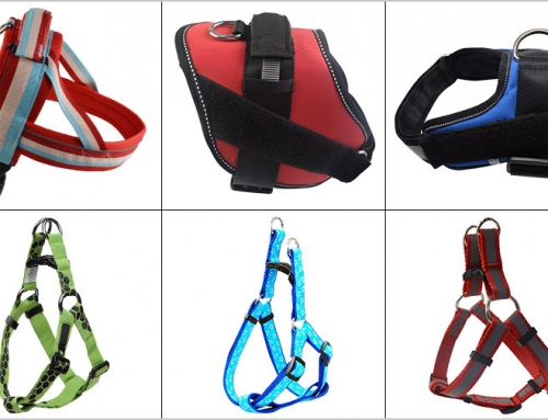 How to use dog training harness to train your dog to walk or heel